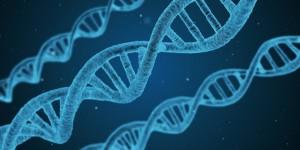 Генът CAT -262 (каталаза) е сред включените нови гени в генетичното изследване NGHealth. Той кодира антиоксидантния ензим каталаза (CAT), който се изявява в най-големи количества в черния дроб, бъбреците и еритроцитите.